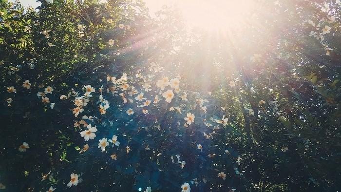 kinh nghiệm du lịch bình liêu mùa hoa sở