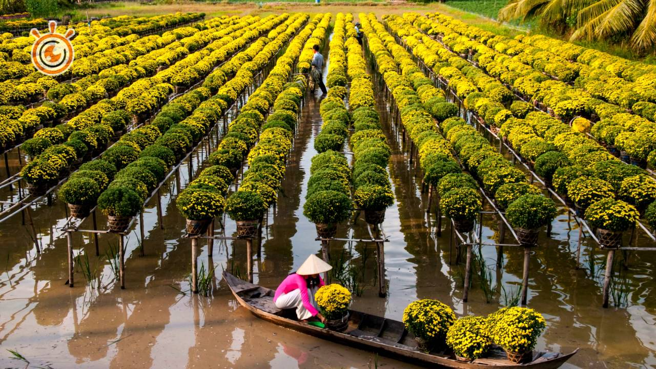 mùa hoa Sa Đéc - hunghabay.vn