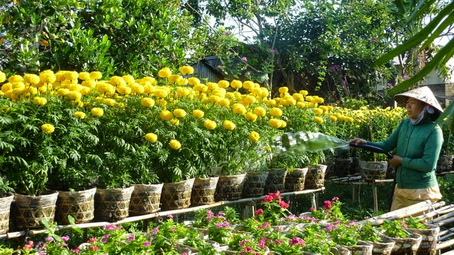 làng hoa sa đéc