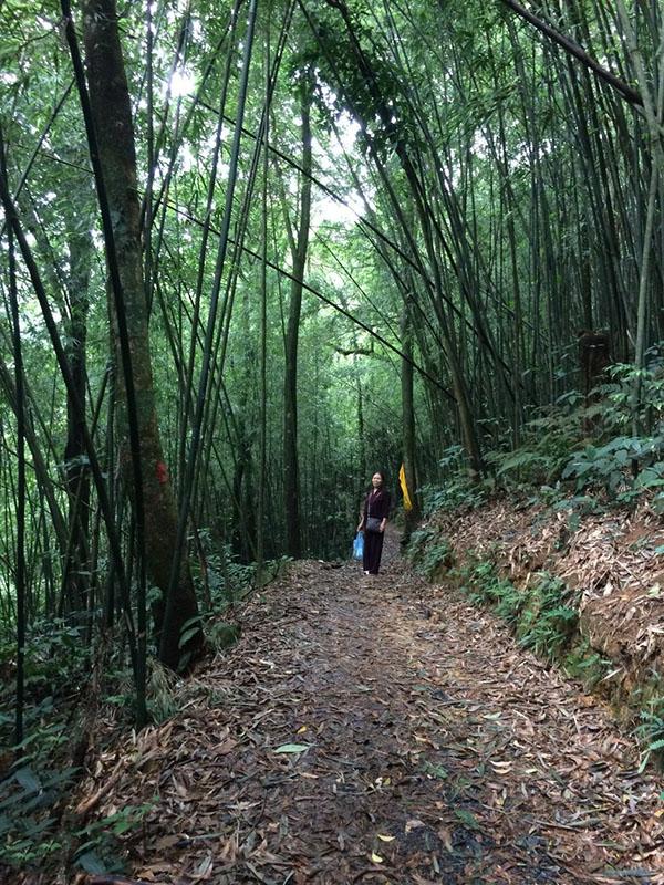 Chuyến trải nghiệm và khám phá chùa Địa Ngục nằm sâu qua rừng ma, ao dứa