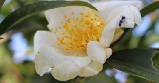 Tới Bình Liêu chiêm ngưỡng hoa sở trắng trời biên thuỳ